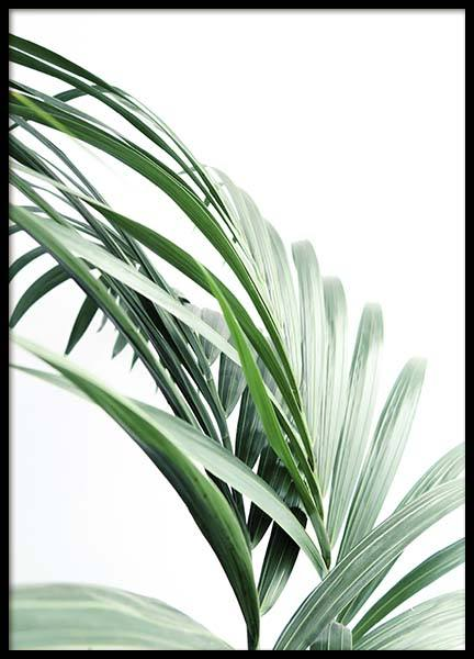 Palm Tree Leaves Close Up Poster nel gruppo Poster / Fotografia presso Desenio AB (10244)
