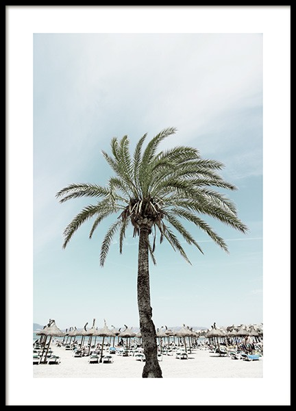 Sunbeds and Palm Tree Poster nel gruppo Poster / Natura presso Desenio AB (10893)