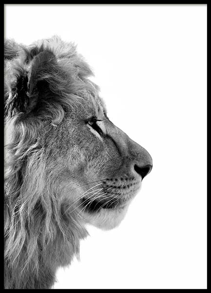 Lion From Side Poster nel gruppo Poster / Animali presso Desenio AB (3892)