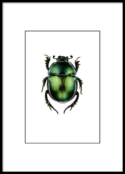 Beetle Small Poster nel gruppo Poster / Vintage presso Desenio AB (7430)