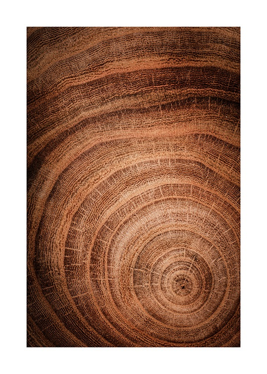 Growth Rings Poster / Natura presso Desenio AB (11873)