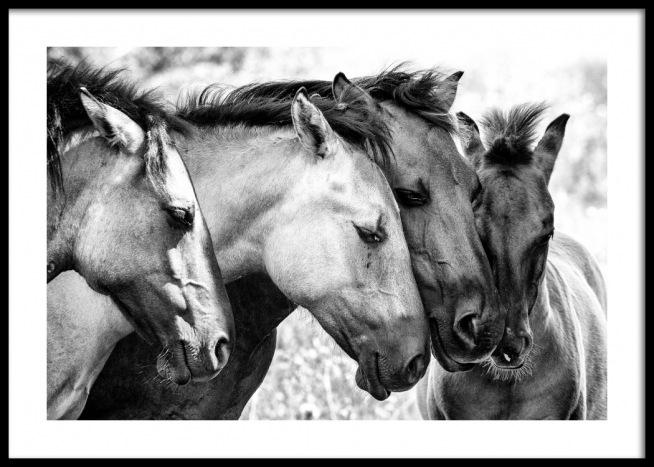 Risultato immagini per FOUR HORSES POSTER