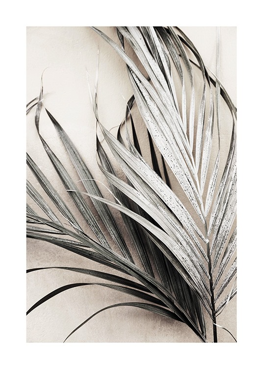 Dry Palm Leaves No3 Poster / Quadri palma presso Desenio AB (13672)